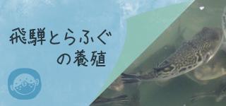top_btn_yosyoku